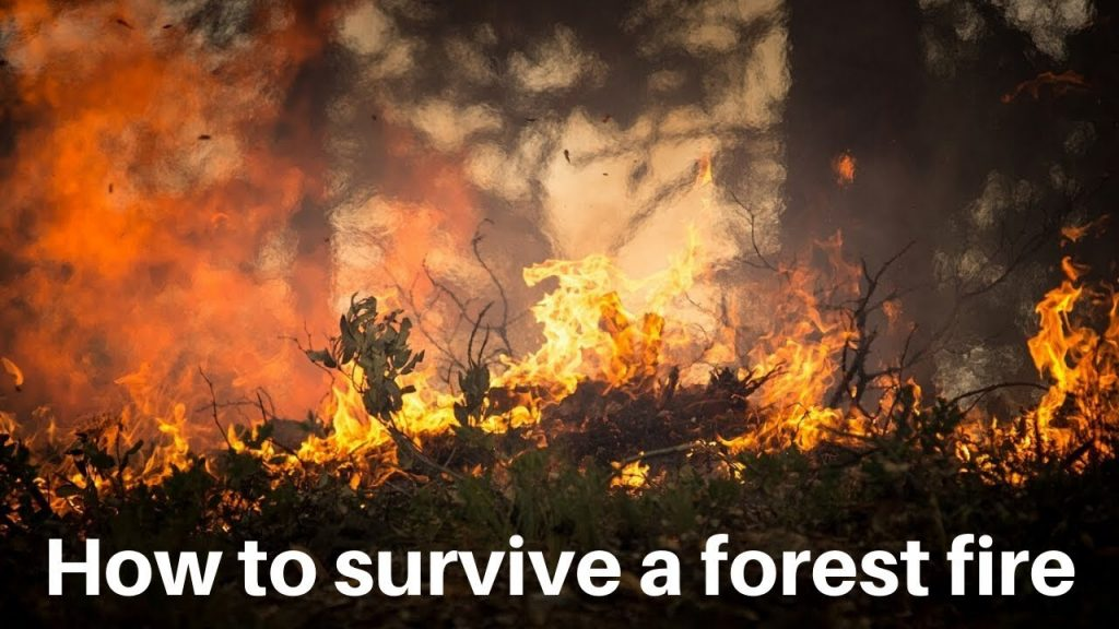 surviving a forest fire